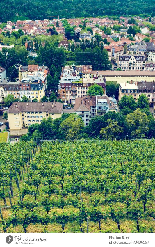 View from Ludwigshöhe in Freiburg to a vineyard and a residential area Vine viticulture wine region breisgau dwell Germany Europe Border area Climate Nature