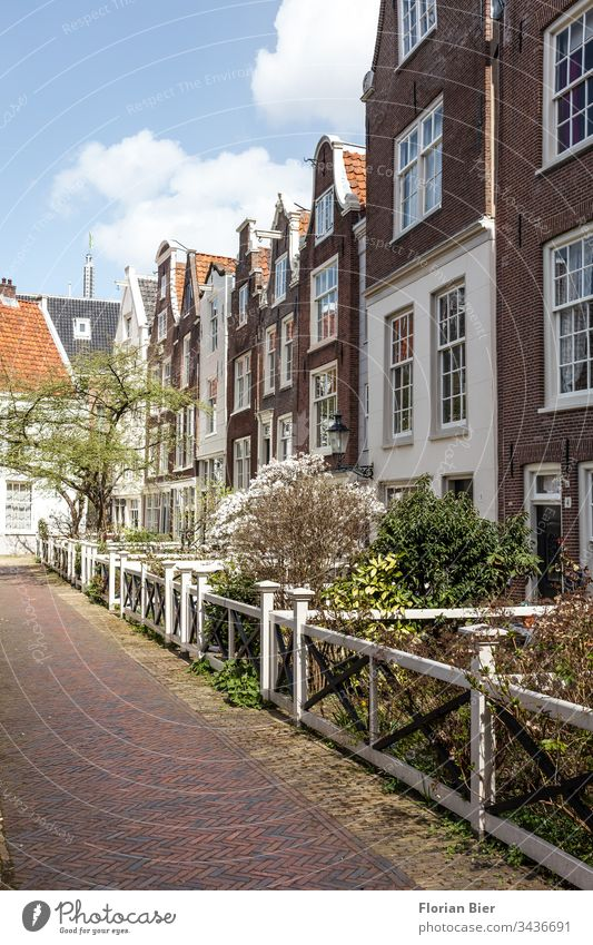 Houses with small flowering front gardens in spring in Amsterdam Netherlands House (Residential Structure) Entrance Window Facade Victorian Building style