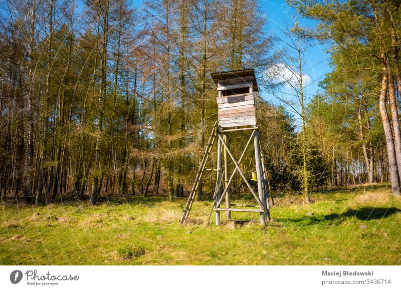 Wooden elevated deer hunting blind. pulpit tree stand nature season woods field sunny day forest landscape green