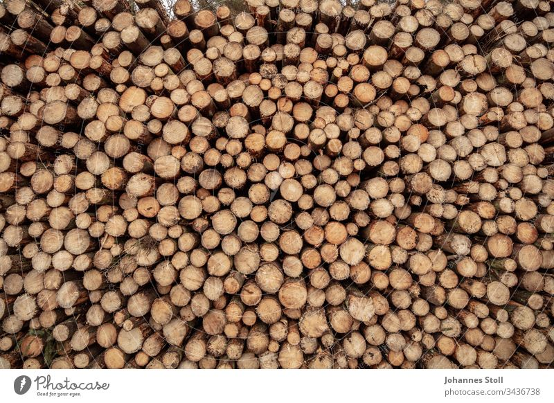 Close-up of a wood stack Wood Stack of wood texture structure Pattern Grid Round circles tribes log Tree Forest Forester Forestry Forest death Climate change