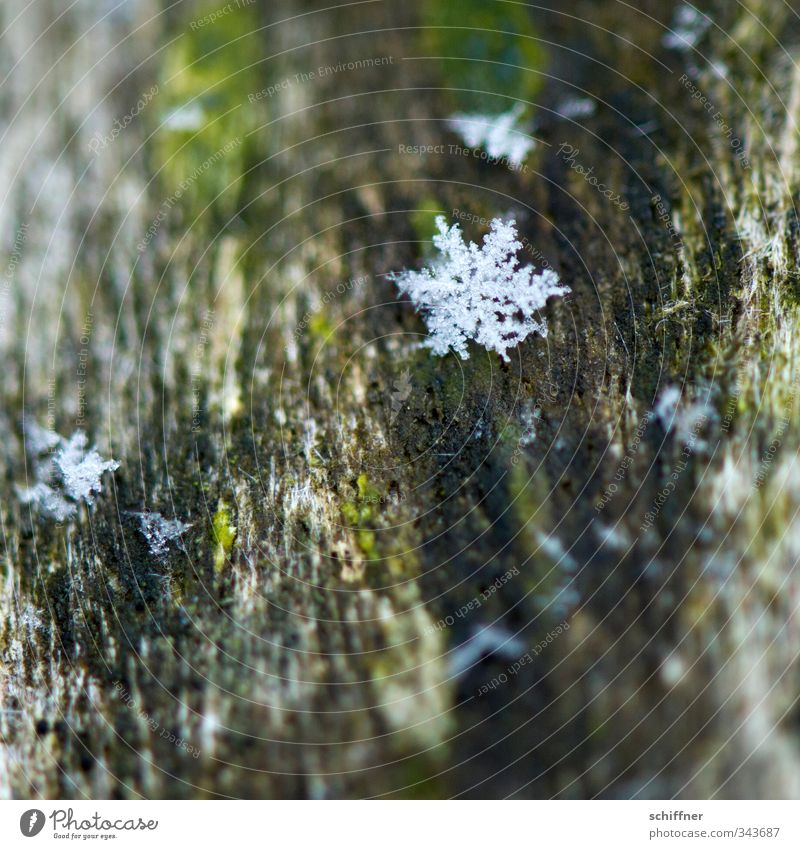 Time change | Herald Nature Snow Cold Flake Snowflake Ice crystal Star (Symbol) Winter Snowfall Frostwork Christmas & Advent Anti-Christmas Winter mood