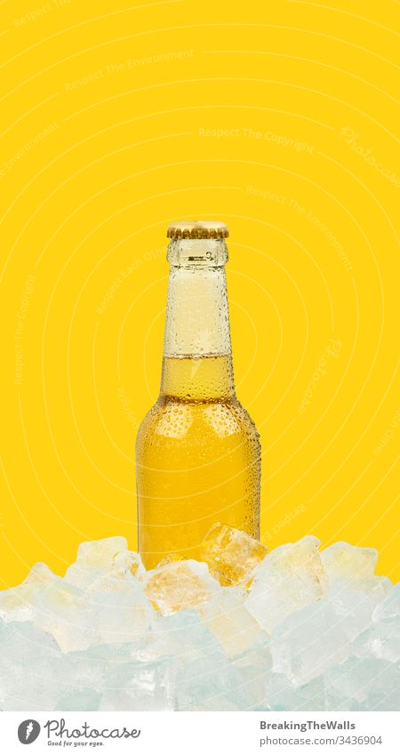 One bottle of cold lager beer on ice cubes over vivid yellow background Beer glass transparent clear golden one rocks ale closeup blue isolated retail display