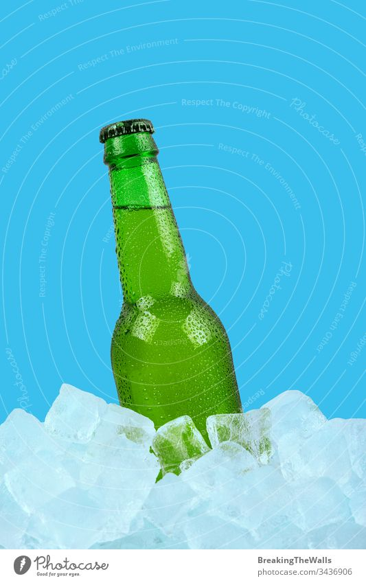 One bottle of cold lager beer on ice cubes over blue background Beer glass green one rocks ale closeup isolated retail display low angle view side copy space