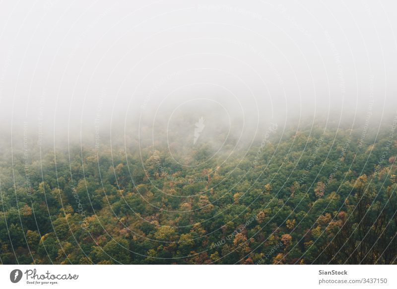 View of foggy mountains with trees forest nature Greece Evros Rodopi autumn landscape misty light green morning background dark dawn mystery fantasy beautiful