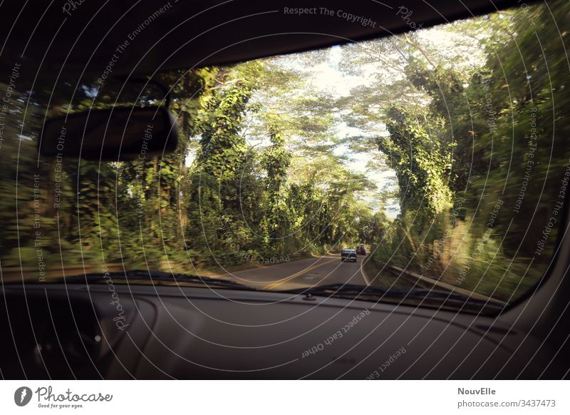 On the road in Hawaii road trip Driving Motoring Forest Speed swift USA Kauai