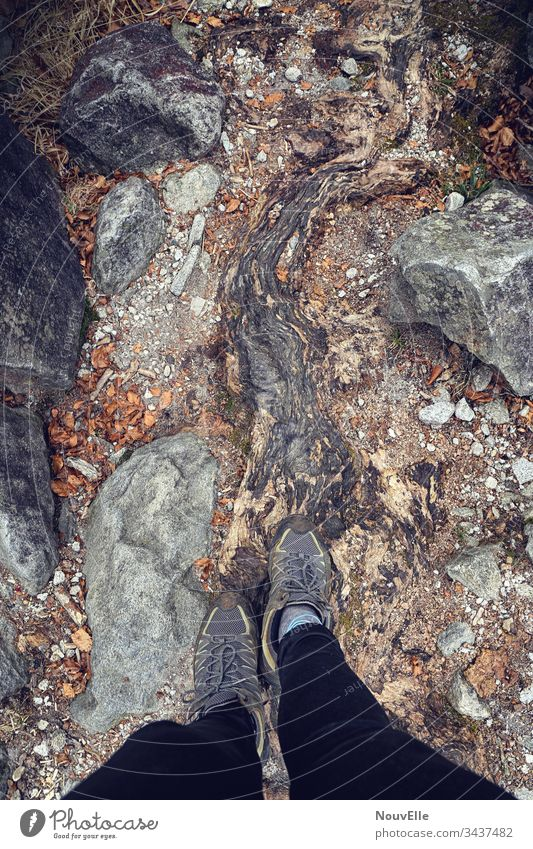 On the road in Switzerland verzasca Ticino Root Stone Hiking Walking Nature out Autumn