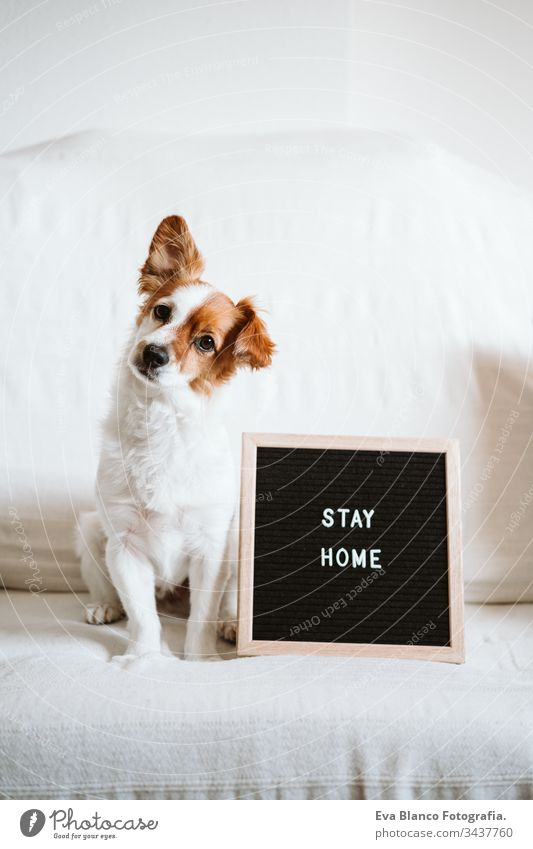 cute jack russell dog on the sofa with letter board with STAY HOME message. Pandemic coronavirus covid-19 concept stay home pet corona virus daytime nobody