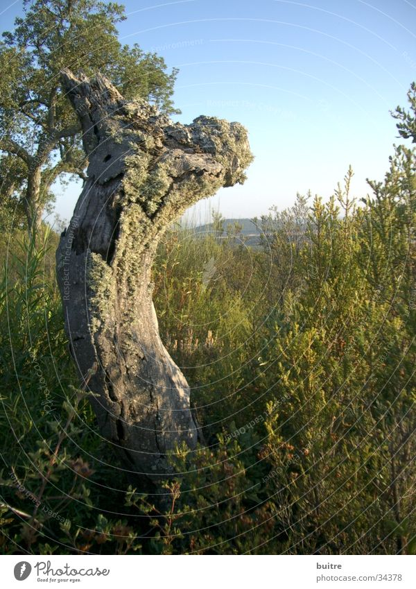 Sky Tree Green Meadow Death Spain Dull Unwavering Headstrong