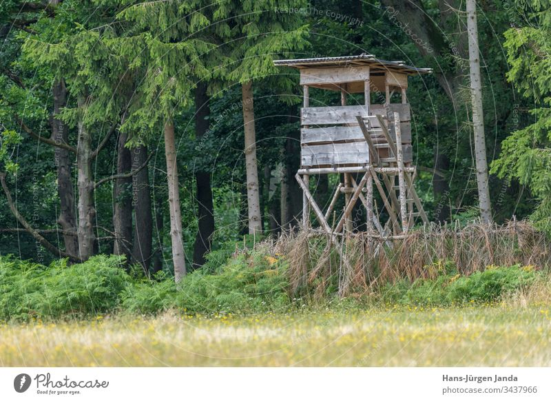Huntsman high seat at the edge of the forest in front of a meadow with green background High seat hunting hunter lookout animals trees europe hide nature