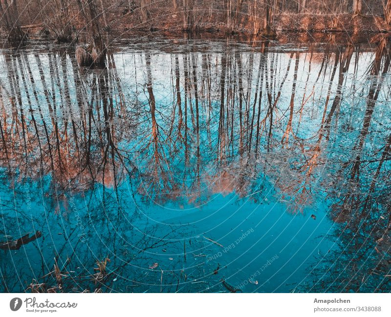 Reflection lake in the forest Lake Lakeside Sea coast Forest Woodground Clearing Edge of the forest Forest walk Mirror image reflection Winter Spring Spring day