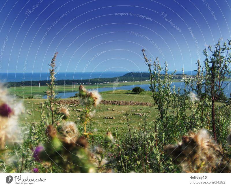 rebukes Peninsula Grass Summer Landscape Water Beautiful weather