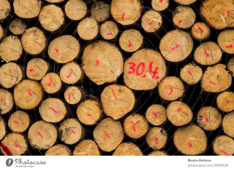 marked logs stacked - with red and black markings and date 30.4. Wood Wooden stake Stack of wood Markings Date April Firewood Tree trunk Deserted Forestry Day