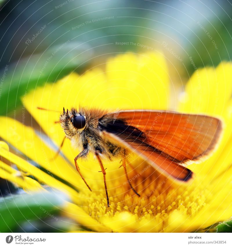 Butterfly butterfly Spring Plant Flower Animal Insect 1 Flying Yellow Green Orange Spring fever Spring flower Wing Colour photo Multicoloured Close-up Detail