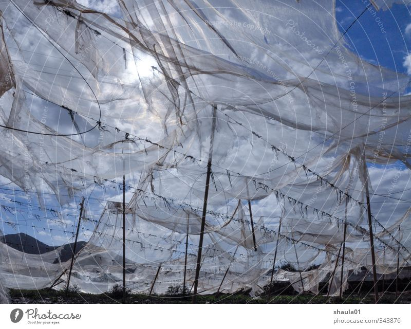 tattered skies Landscape Air Sky Sun Sunlight Wind Field Blue Transience Far-off places Airy Torn Judder Gauze Blow Rag Colour photo Exterior shot Deserted Day