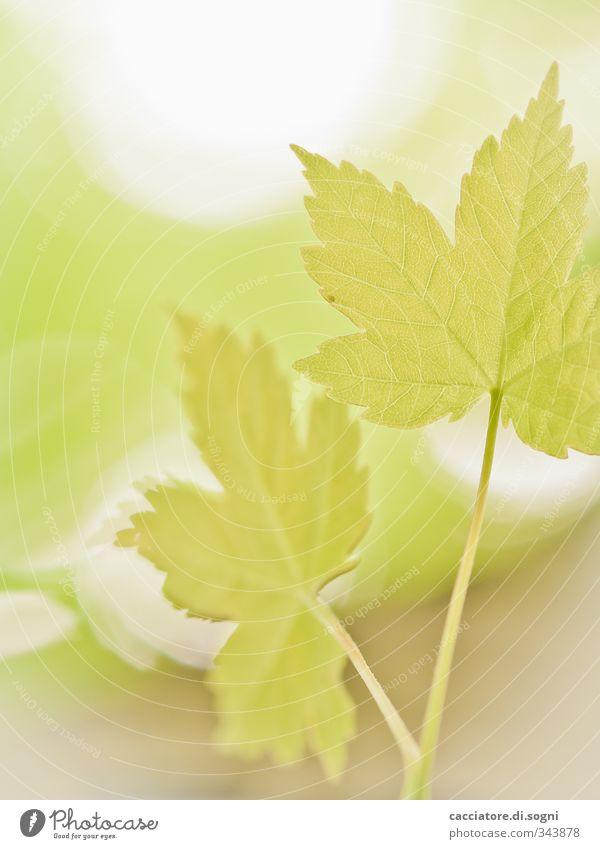 Nature Green Beautiful Plant Calm Leaf Spring Happy Bright Dream Power Idyll Beautiful weather Fresh Beginning Esthetic