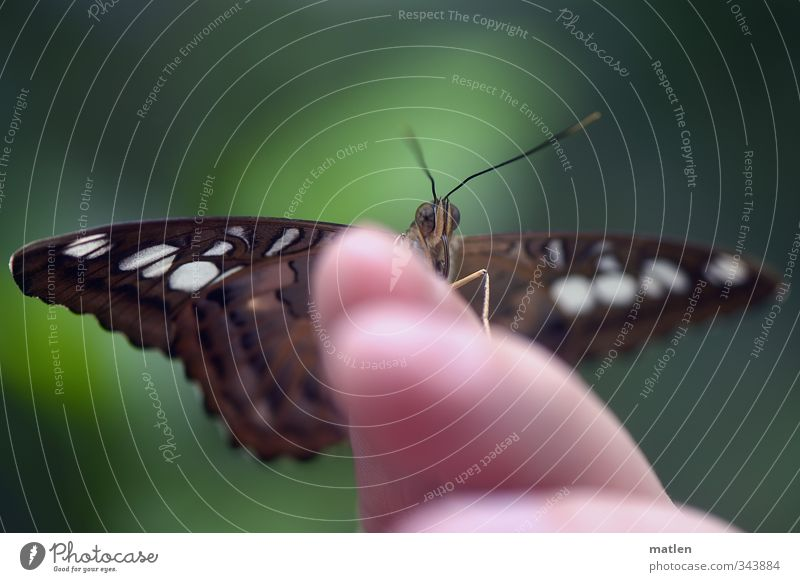 tame Animal Butterfly 1 Brown Green Restful Colour photo Exterior shot Blur Animal portrait