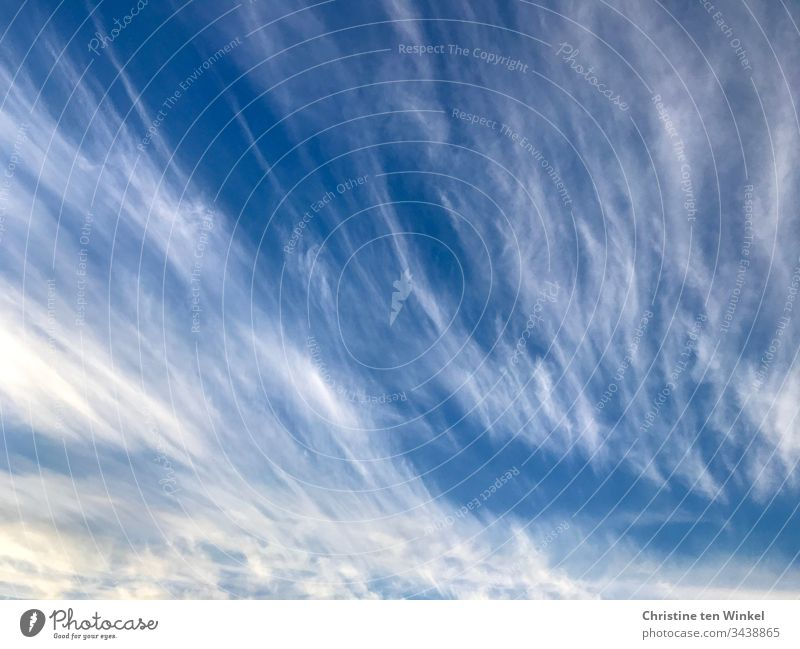 cirrus clouds feather clouds Clouds Sky Blue Moody Exterior shot White Nature Day Weather Beautiful weather Climate Sunlight Summer Environment Climate change