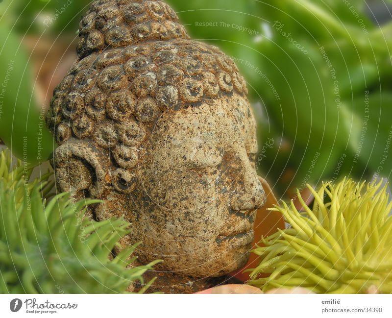 Old Green Plant Relaxation Head Stone Buddhism Craft (trade) Meditation Thorn Buddha