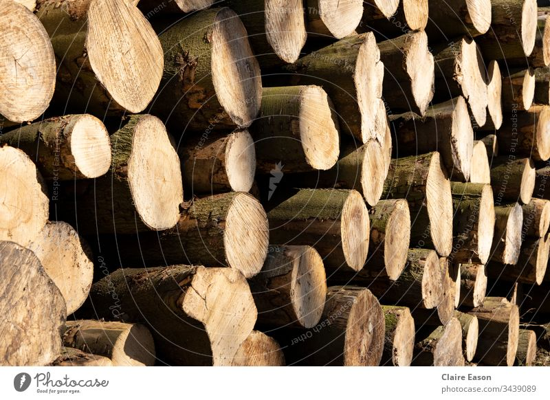 Full frame oblique view of a stack of sawn tree trunks. Warm light and dark brown tones. log storage Wood Log Nature Exterior shot Close-up Colour photo