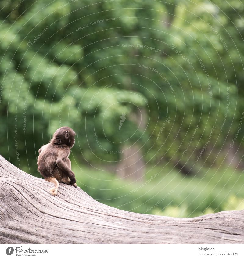 Green Animal Baby animal Small Brown Wild animal Sit Cute Monkeys