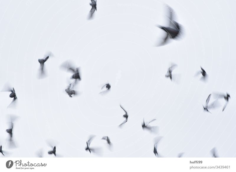 The disappearance of the pigeons - diffuse and quietly they fly away Pigeon Flock Flying Escape Motion blur birds Bird Animal Group of animals Grand piano