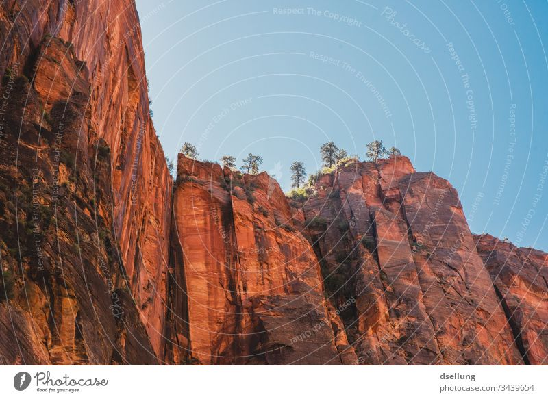 Red high rocks with trees rising into the sky Vacation & Travel Zion Nationalpark USA Summer Rock Steep Blue Tall rocky stable Massive Cloudless sky Mountain