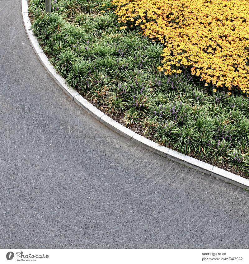 round corner. Environment Nature Plant Animal Summer Flower Bushes Foliage plant Transport Traffic infrastructure Street Lanes & trails Road junction