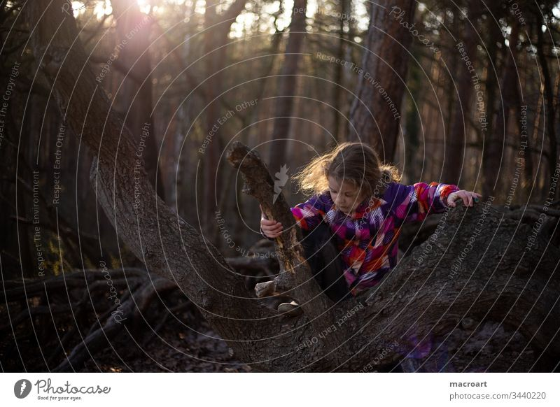 Child playing in the forest Forest Coniferous forest wood roots aboveground Nature Summer Season floral needles coniferous Forestry tree huts