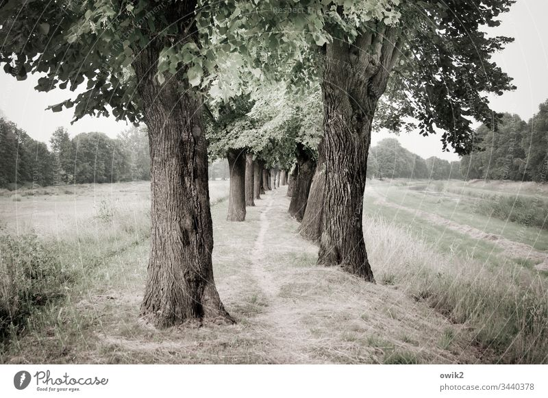 Goal-oriented Narrow off trees Lanes & trails Landscape Nature Exterior shot out Forest Calm Environment Deserted Colour photo Subdued colour Margin of a field