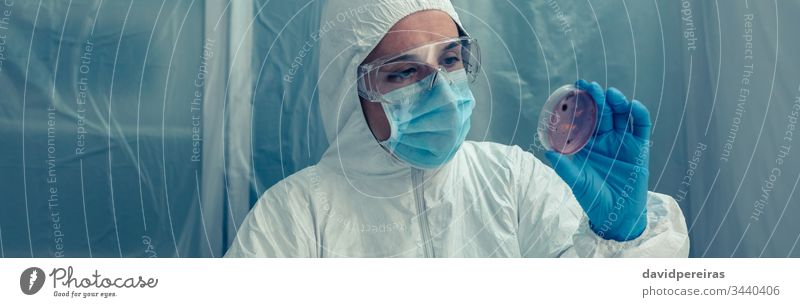 Scientist examining a petri dish in the laboratory coronavirus scientist covid-19 banner web header panorama panoramic bacteriological protection suits bacteria