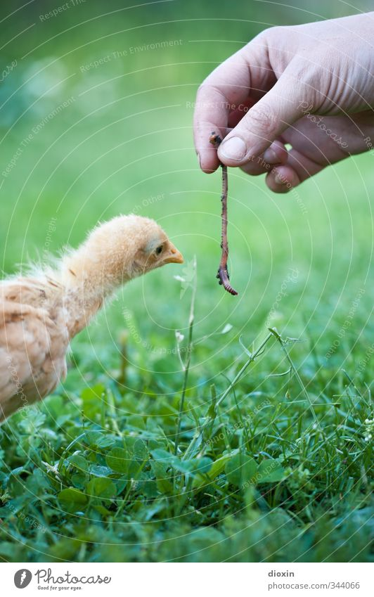Nature Hand Animal Environment Life Baby animal Grass Small Natural Bird Agriculture Curiosity Pet Cuddly Forestry Feeding