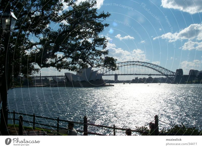 Habour Bridge Sydney Australia Art Tree Clouds Opera Skyline Tourist Attraction metrople Water sigths Sightseeing