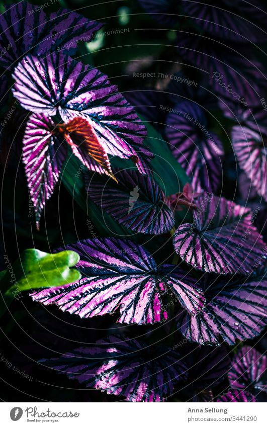 Purple plant with strong line structures purple Structures and shapes Violet Deserted Plant Flower Nature Colour photo Detail Close-up Blossoming Blur