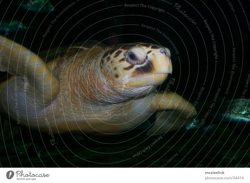 turtle Turtle Turles Aquarium Animal Slowly Armor-plated Water Exotic Water wings slow