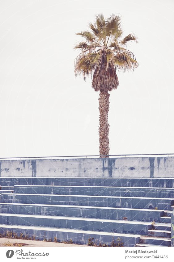 Palm tree over empty concrete stadium seats. row sport arena retro palm abandoned nobody sky vintage step exterior stair game concept old outdoor public