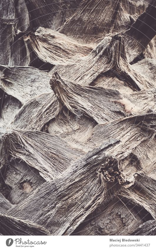 Close up picture of a palm tree trunk. background abstract nature texture backdrop wallpaper detail plant close up rough filtered old wood