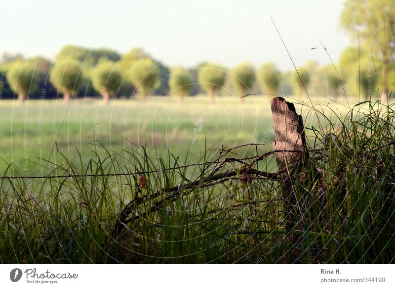 stroll Environment Nature Landscape Spring Summer Tree Grass Meadow Field Natural Green Contentment Joie de vivre (Vitality) Horizon Fence Pole Calm