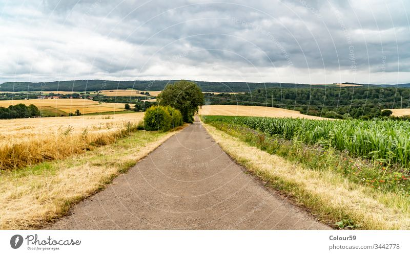 Agricultural fields no people rural summer agriculture path road grass meadow green nature countryside landscape view sky blue background beautiful season