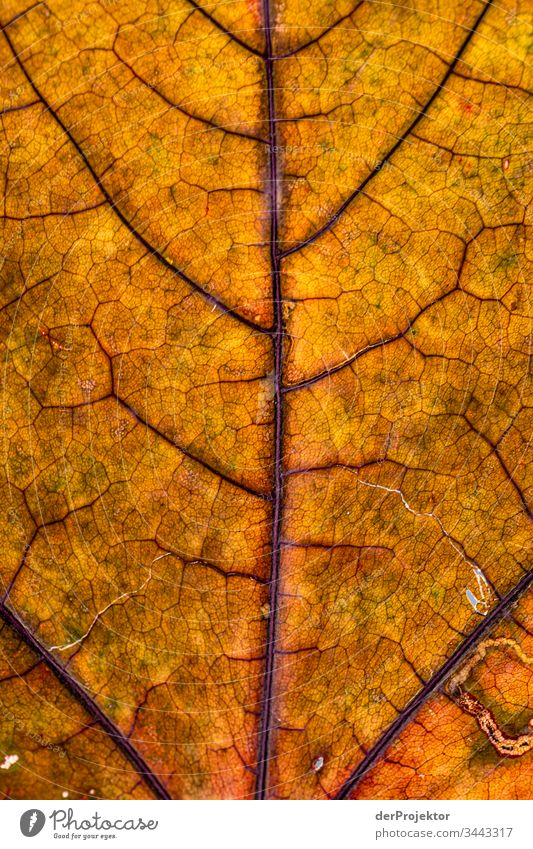 Structure of a leaf Sunlight Deep depth of field Central perspective Contrast Exterior shot Copy Space right Copy Space middle Copy Space top Copy Space bottom