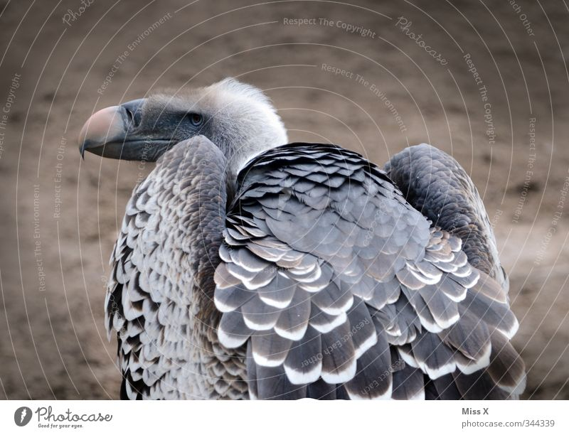 Animal Death Bird Wild animal Feather Wing Hideous Bird of prey Voracious Vulture Scavenger