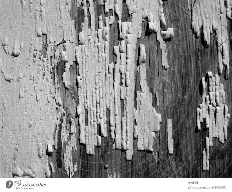 collector's item Wood Old To dry up Thin Broken Near Dry Mysterious Sadness Decline Transience Change Destruction Black & white photo Exterior shot Close-up