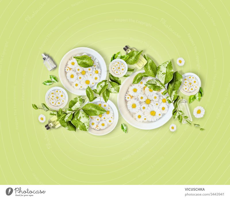 White water bowls with daisies flowers, green leaves and natural cosmetic products for skin care on light green desk background. Top view. Modern beauty concept. Healthy lifestyle. Composition