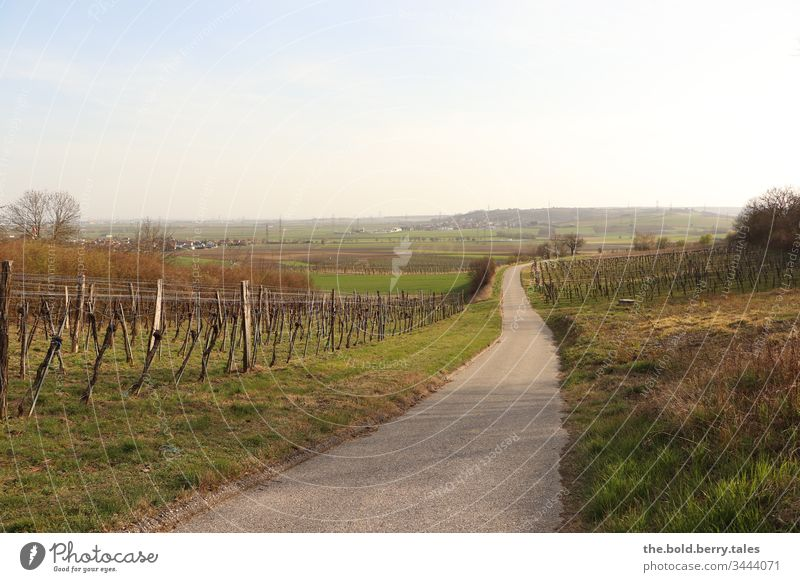 Way through the vineyards in spring Landscape Vines Colour photo Nature Exterior shot Plant Day natural green Grass Deserted Meadow fields bushes tree Sky Field