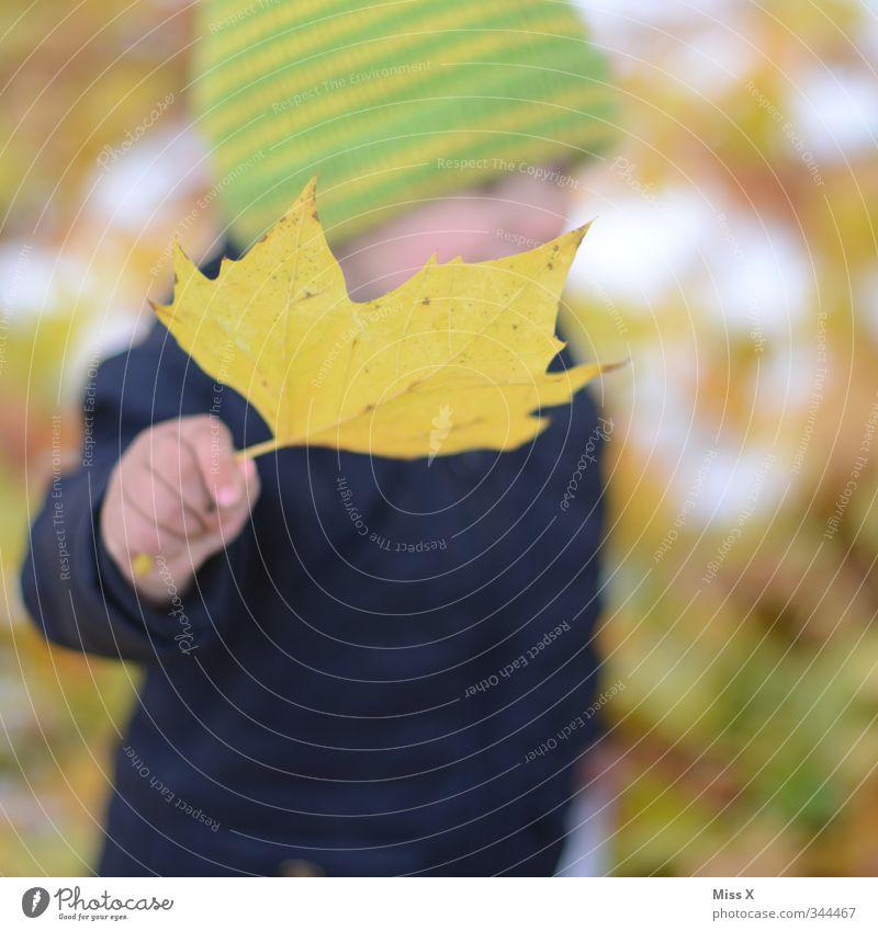 Human being Child Hand Joy Leaf Yellow Cold Autumn Infancy Baby Happiness Toddler Cap Autumn leaves Collection Autumnal
