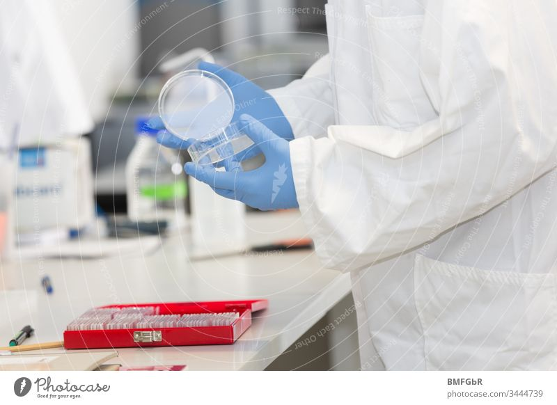 hands in blue lab gloves working with a culture dish in a laboratory analysis analyzing assay attempt biological care chemical chemist chemistry clinic corona
