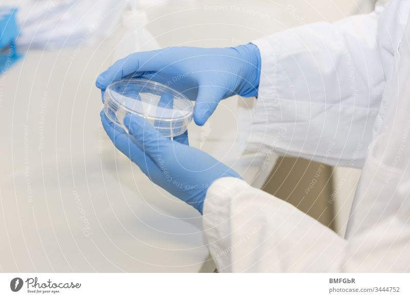 hands wearing blue gloves holding culture dish analysis analyzing assay attempt biological care chemical chemist chemistry clinic corona coronavirus development