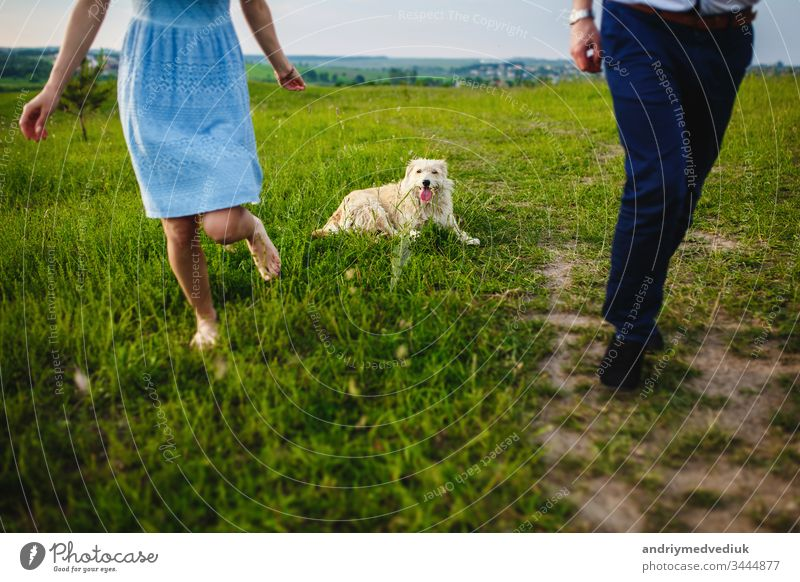 happy dog is having a rest with the owner in the nature. have fun with her dog in park pet people lifestyle love cute happiness animal young green grass outdoor