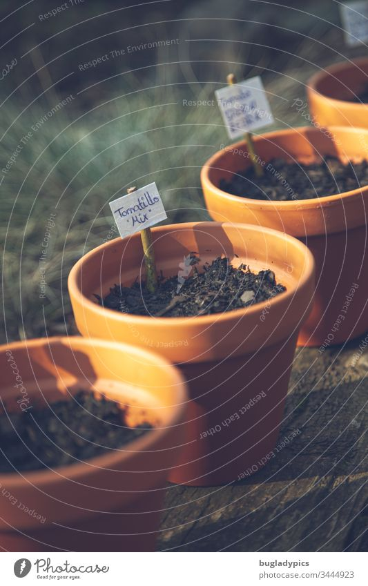 A series of clay flower pots filled with soil and marked with planting signs Flowerpot flowerpots clay pots plants Tomatillo look Potting soil Nature Garden