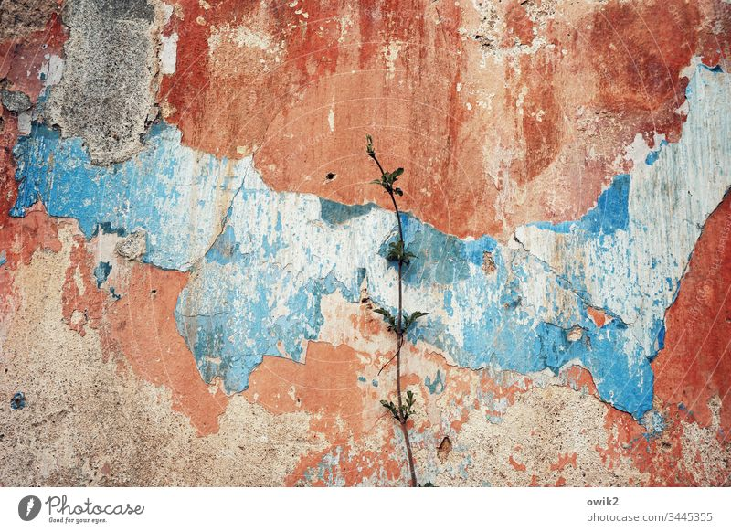 delicate green Wall (building) chapped run-down defective Old Trashy wall paint Red Blue Transience Past Decline Wall (barrier) Exterior shot Day Broken Change