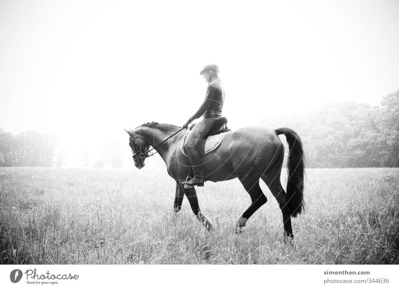 horseback riding Ride Equestrian sports Nature Field Forest Horse Adventure Contentment Movement Bizarre Elegant Relaxation Experience Vacation & Travel